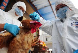 口蹄疫和高致病性禽流感防治计划印发